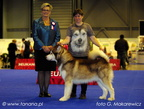 SAGGI-TO REDBEAR Illa Kuvianartok - working class - Exc.1, CAC , judge Mrs. Paterson Cheryl